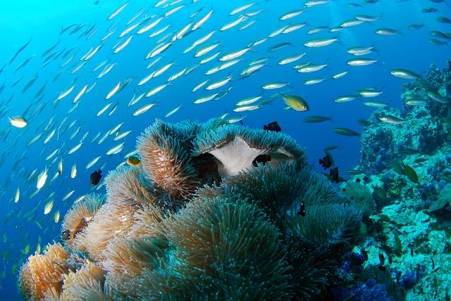diving-689825_640
