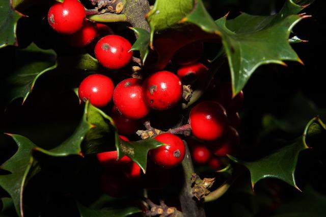 naughty holiday mistletoe game