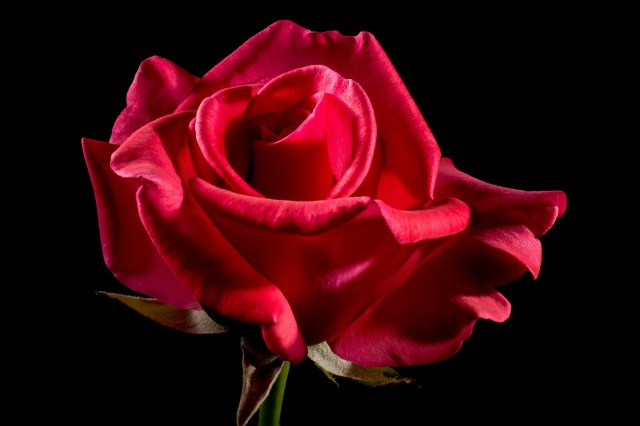 red-rose-320891_1920